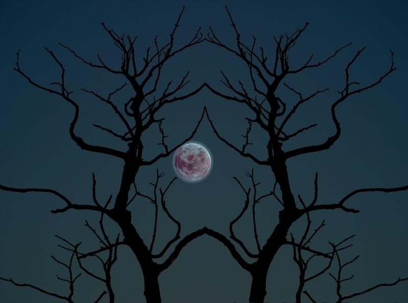 Always halloween free halloween desktop backgrounds for Creepy trees for halloween